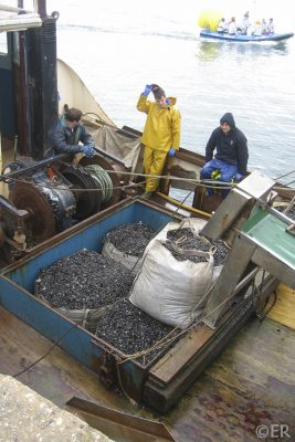 Nicola L dredging seed mussel